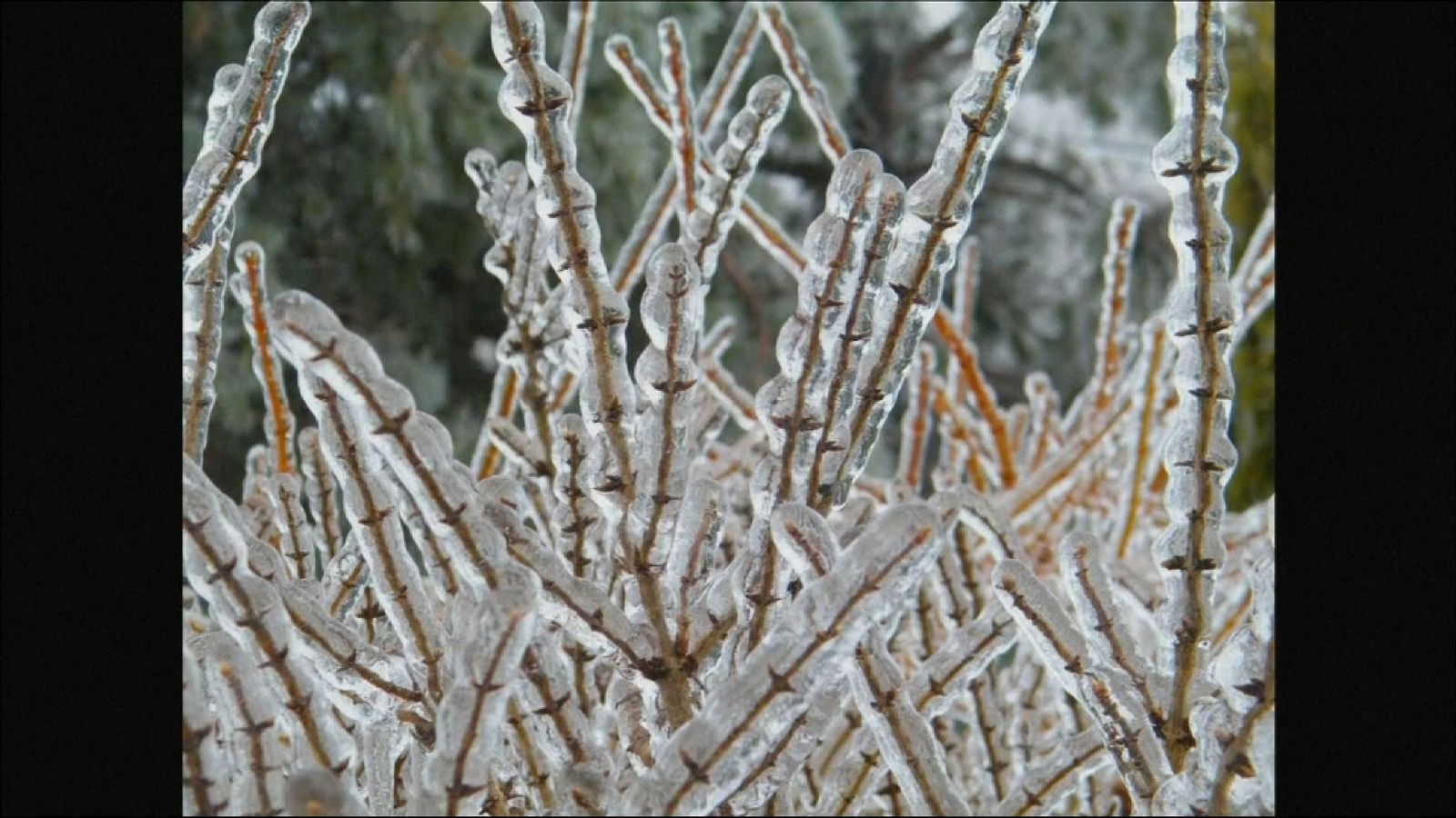 Storm increases Canadian forest in ice