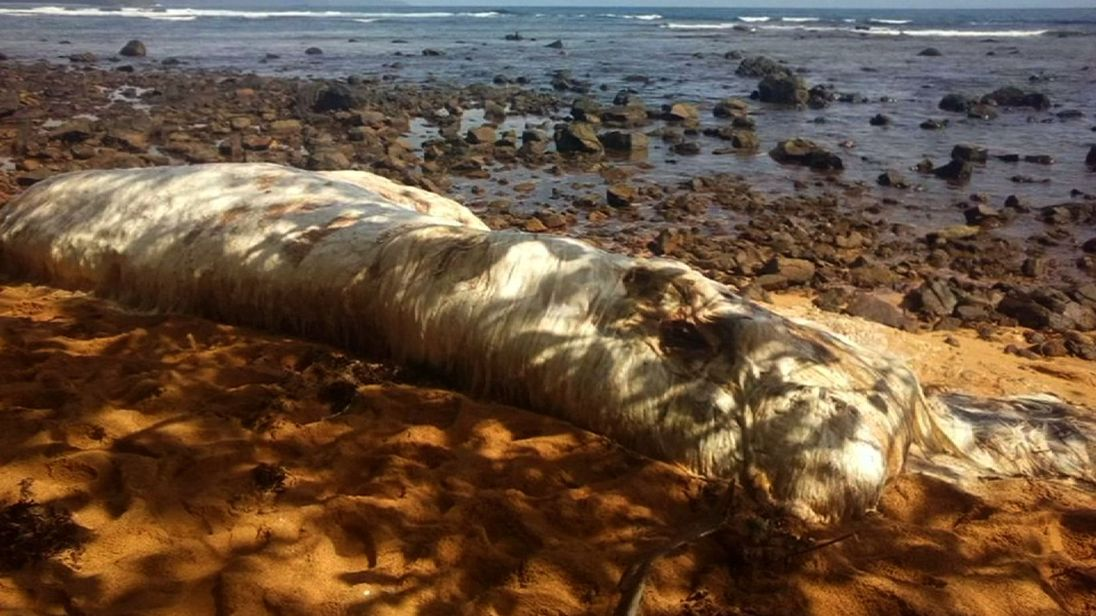 Sea Cow? Large washed-up creature is baffling locals. Pic: Teodoro L Alipayo
