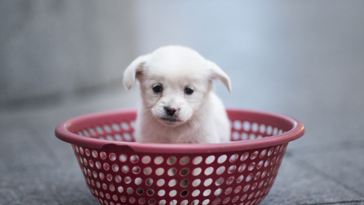 A puppy sits in a plastic strainer, waiting to be sold by its owner, in front of a subway station in downtown Shanghai on October 28, 2015