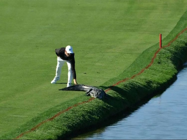 Cody Gribble removed the reptile by slapping it on the tail
