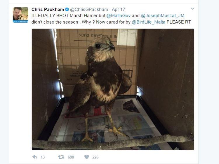 Chris Packham has been highlighting the plight of wild birds in Malta on Twitter