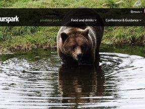 The brown bear had dug its way out of an enclosure at Orsa Rovdjurspark