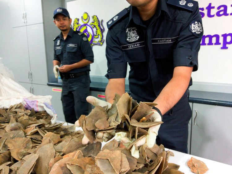 Malaysia customs officers display pangolin scales seized over the weekend during a news conference at the airport in Sepang, Malaysia