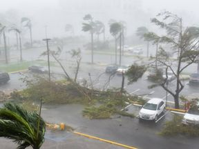 Toppled trees and damaged cars in a parking lot in San Juan, Puerto Rico