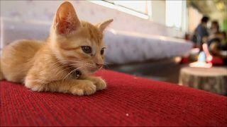 Japan's Cat Cafe goes mobile