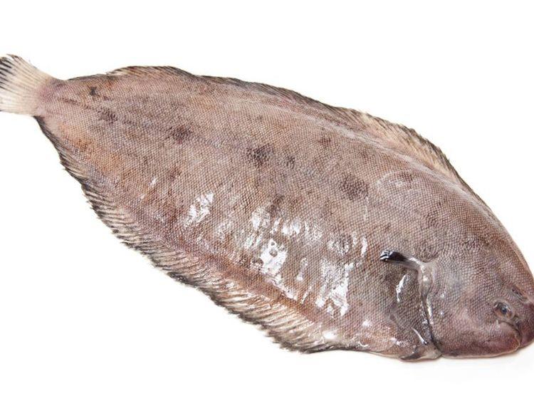 The dover sole measured 14cm. File photo