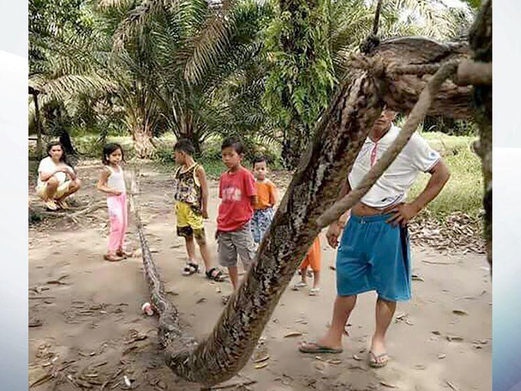 The snake. Pic: AFP PHOTO / BATANG GANSAL POLICE