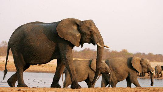 A herd of elephants in Hwange National Park, Zimbabwe