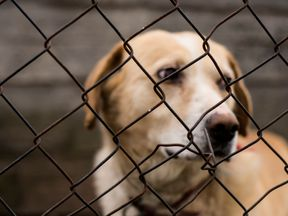 Abused abandoned dog in exile looking sad
