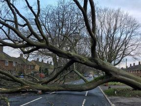 A massive downed tree blocks a residential street in Norwich. Pic. Dale Samuels
