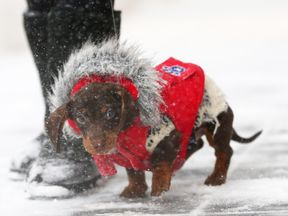 A dog wraps up for the bomb cyclone that has hit to East Coast