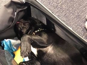 The puppy spent more than three hours in an overhead locker