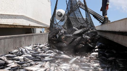 Fishing stocks being overfished