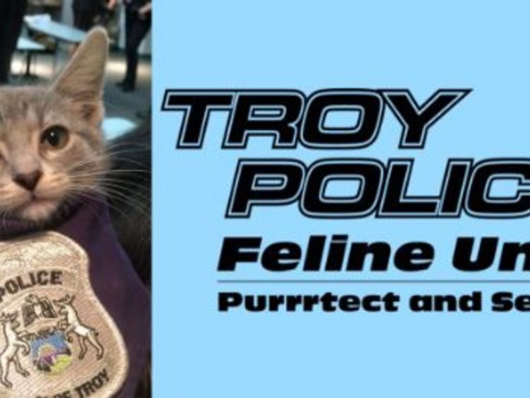 Pawfficer Donut, a rescue kitten, has been officially sworn in as the newest member of Troy Police Department, Michigan. @TroyMI_Police