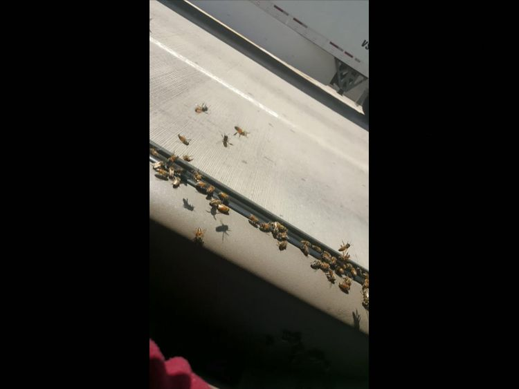 About 3,000 bees swarmed the vehicle