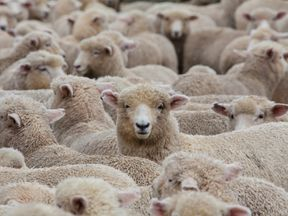 The sheep were killed on train tracks in the German state of Baden-Wurttemberg