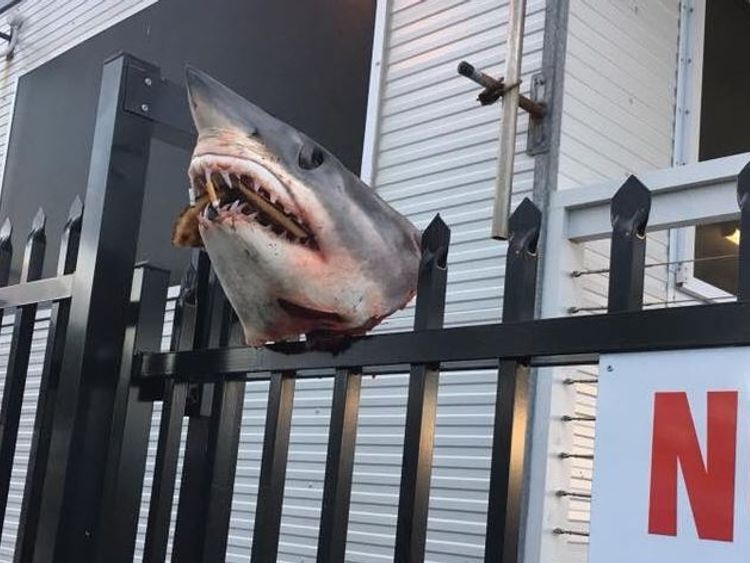 The shark's head was stuffed with cigarette butts