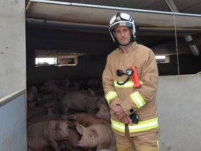 Northern Ireland Fire and Rescue Service Group Commander Geoff Somerville with the rescued pigs