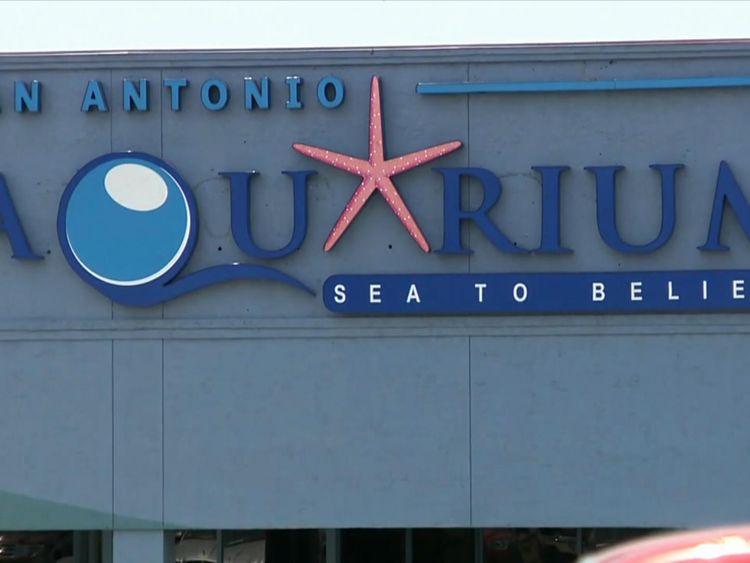 The shark was stolen from San Antonio Aquarium