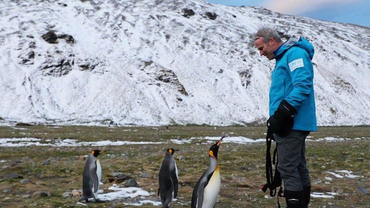 Lewis stands among king penguins