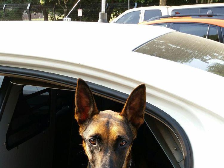 Dog overdoses on heroin  https://clackamas.us/sheriff/2018-08-08-CCSOPR-K9AbbieNarcan.html