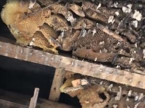 More than 60,000 bees were found living in a roof. Pic: The Tree Bee Society Facebook