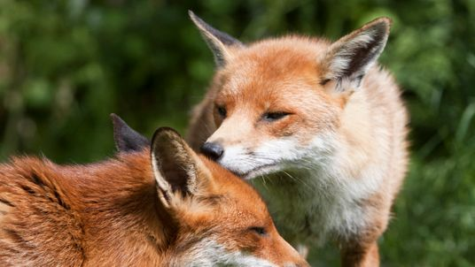 Species native to the UK are at risk of extinction