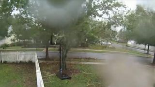Tree is blown over in Florida as Hurricane Michael sweeps across state