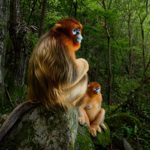 Wildlife Photographer Of The Year: 'I was lucky the monkeys behaved'