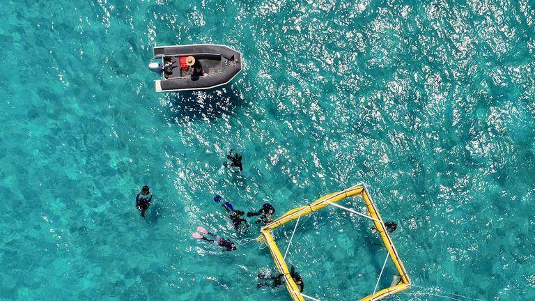 Great Barrier Reef coral reseeding. Pic: Biopixel/James Cook University