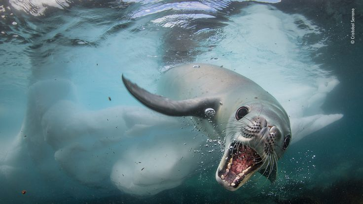 Wildlife Photographer Of The Year People's Choice - pic by Cristobal Serrano