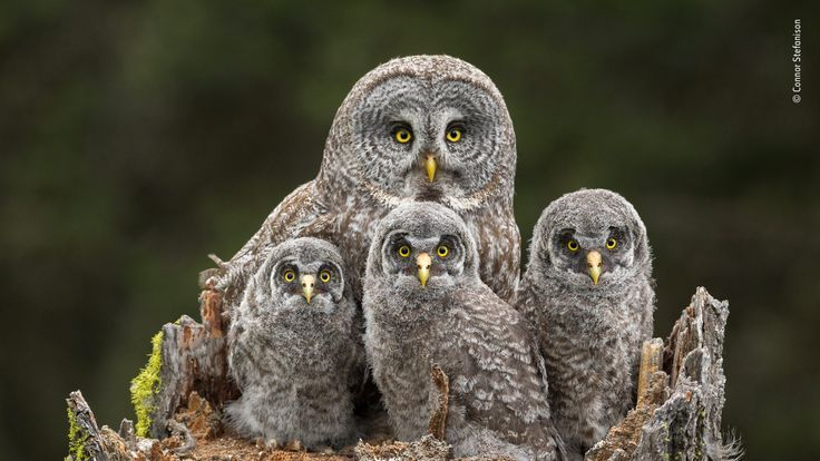 Wildlife Photographer Of The Year People' Choice - pic by Connor Stefanison