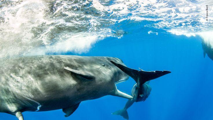 Wildlife Photographer Of The Year - pic b Franco Banfi