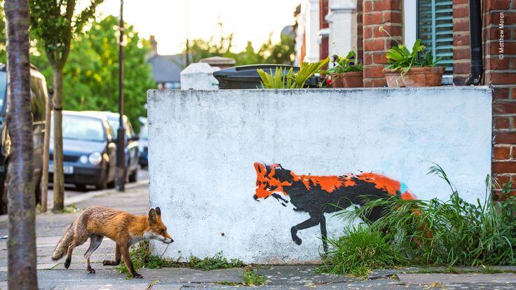 Wildlife Photographer Of The Year - pic by Matthew Maran