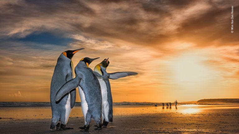Wildlife Photographer People's Choice - pic by Wim van den Heever