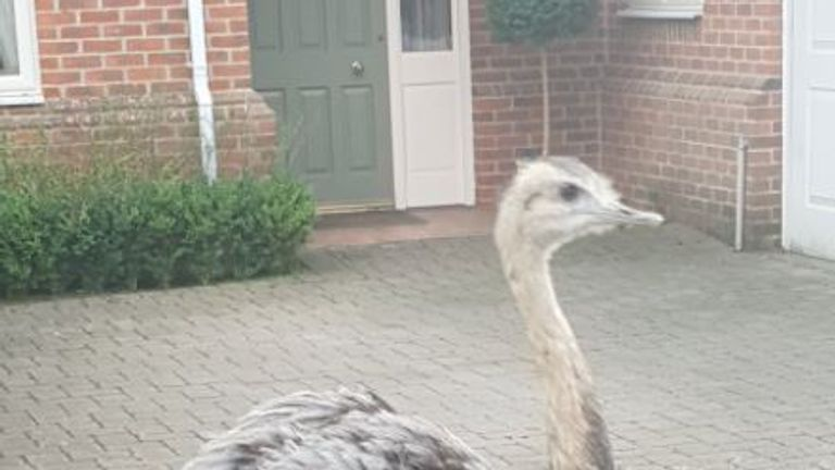 Police are searching for this bird after it was believed to have escaped from a farm